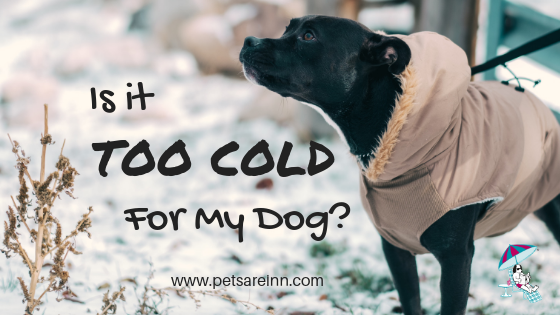 too cold for dog