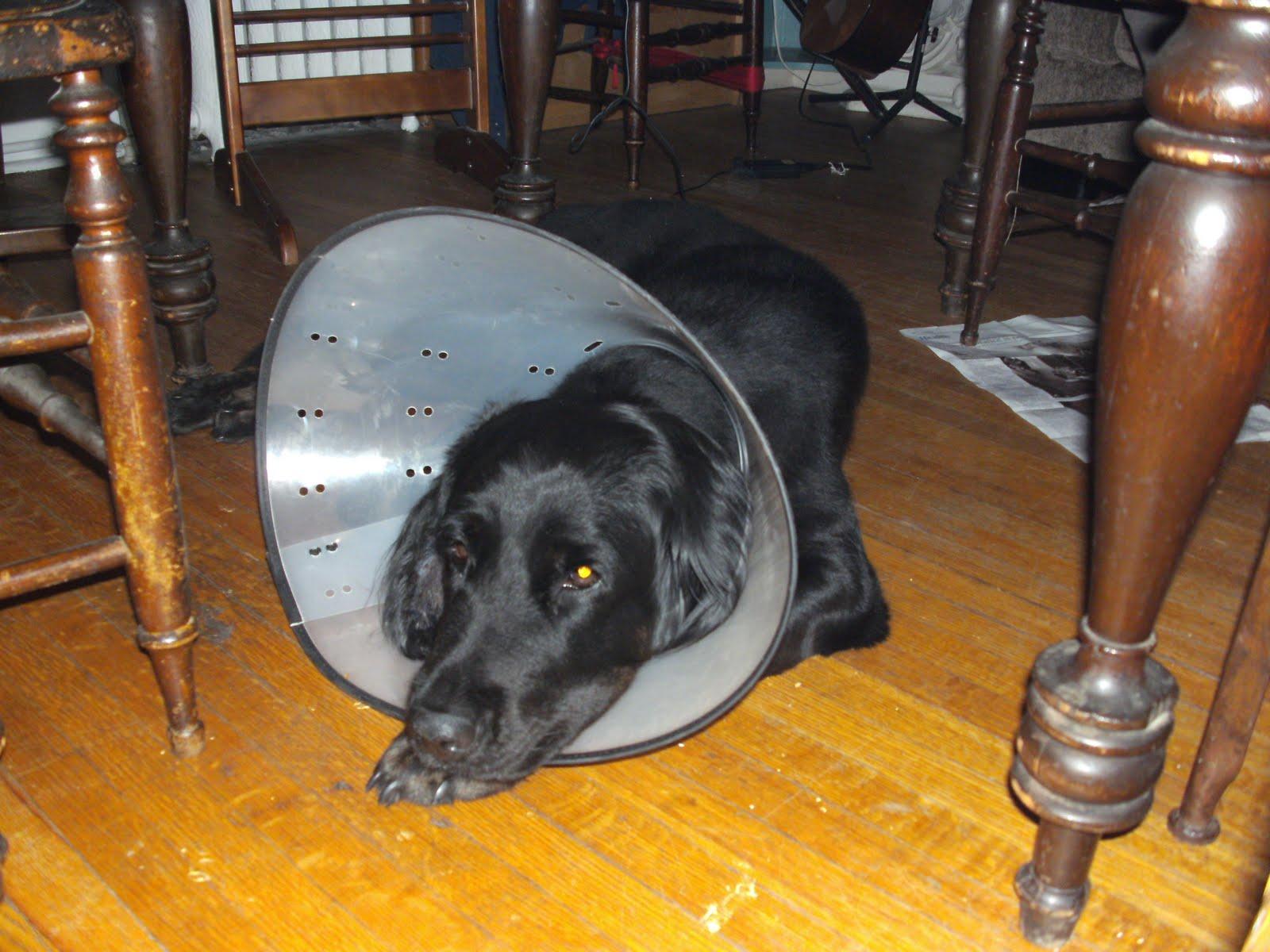 hunde halskrause selber machen