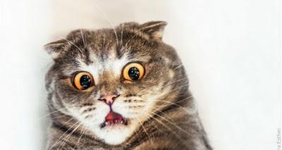 chat apeuré