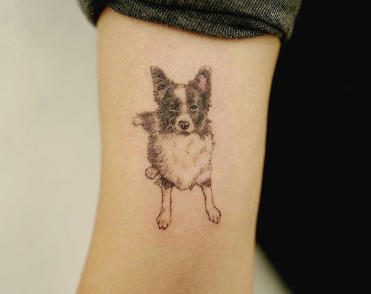 Australian Shepherd Tattoo