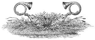printable border design artwork scrapbook botanical clipart