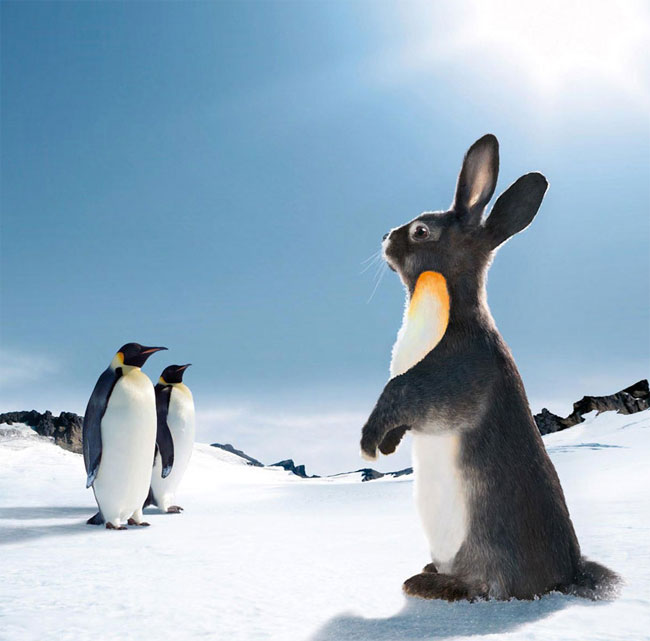 Funny Rabbits New And Fresh Photos Images Funny And