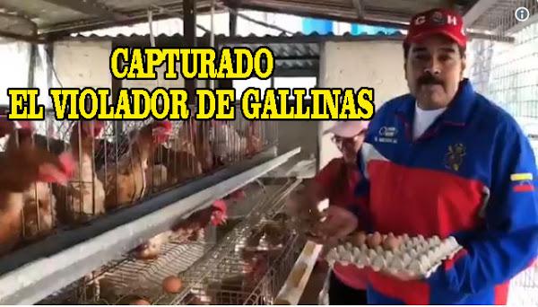 Maduro tiene 152 gallinas ponedoras en su casa