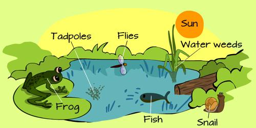 Ekosistem Komponen Biotik Dan Komponen Abiotik