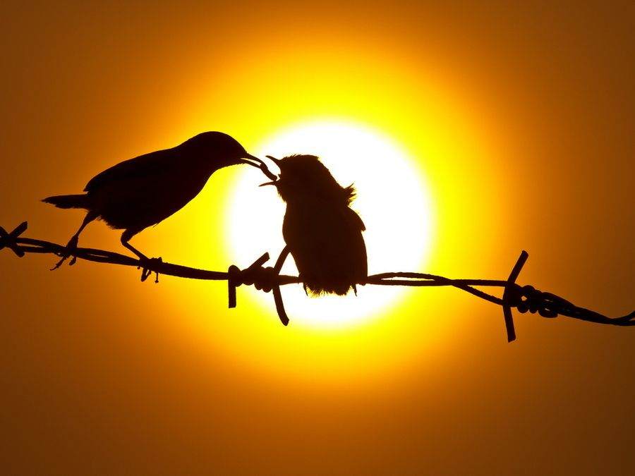 6. Silhouette by SIJANTO NATURE