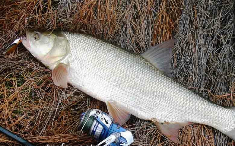 Рыбалка wix