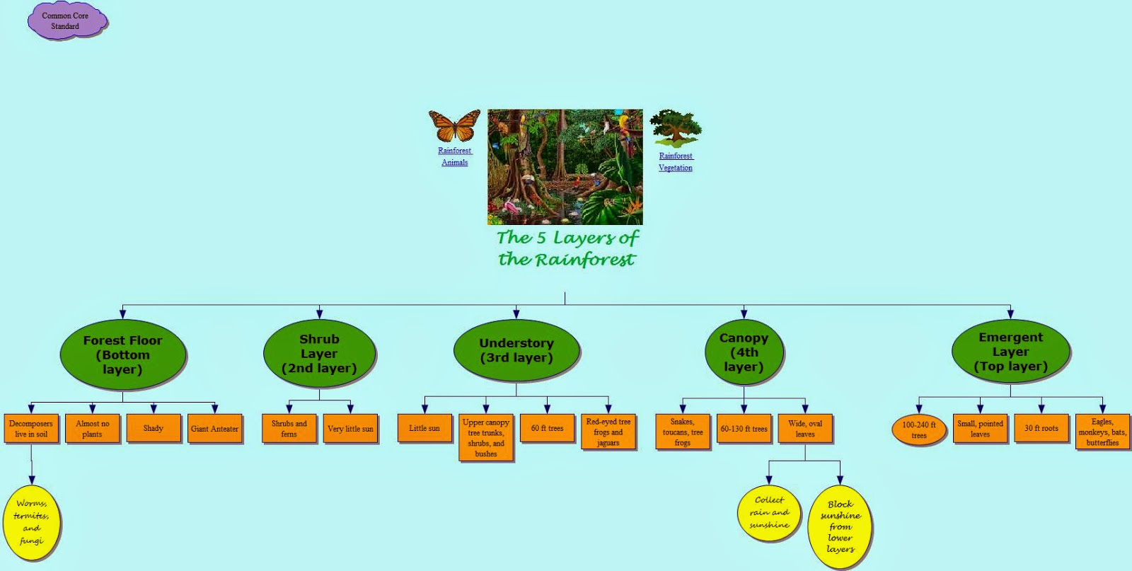 It 365 Fall Olivia Herring Concept Map The 5 Layers Of The Rainforest