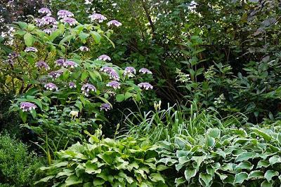 Bepflanzung eines halbschattigen Gartenbereiches - GR 2 - feucht, nährstoffreich