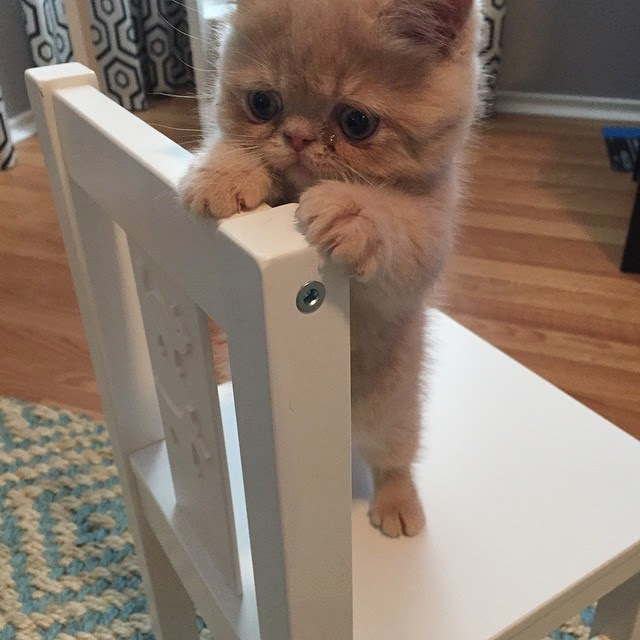 George el gato parado en dos patas