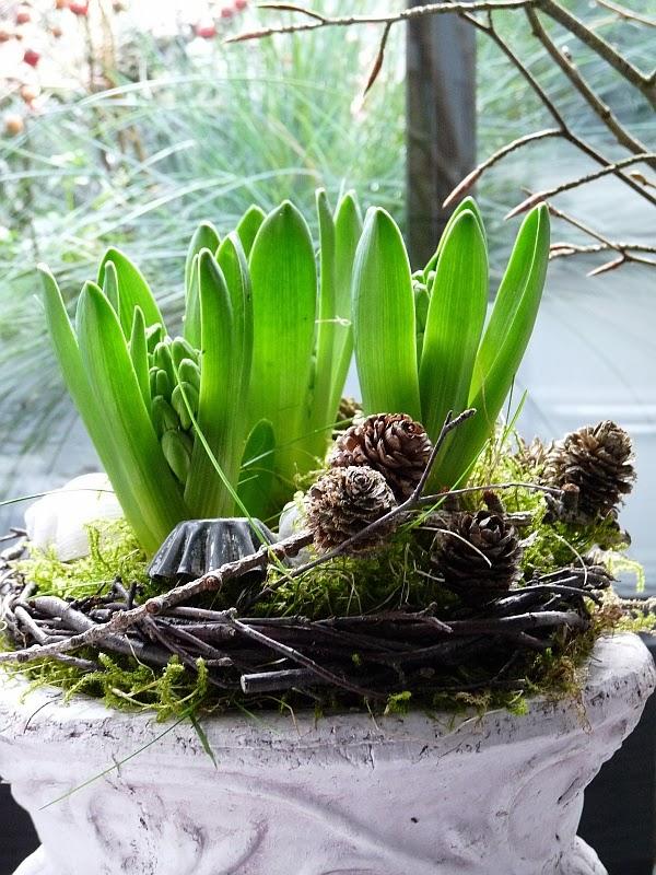 blumen im februar welche blumen blhen wann free lilie blumen knospen blhen with welche blumen. Black Bedroom Furniture Sets. Home Design Ideas