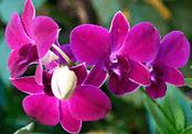 ekspor tanaman hias indonesia, tanaman ekspor, jenis tanaman hias yang berpotensi ekspor