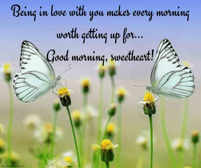 good morning love messages to my love with butterflies