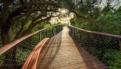 Šetnja visoko iznad drveća, pogledajte predivno šetalište.