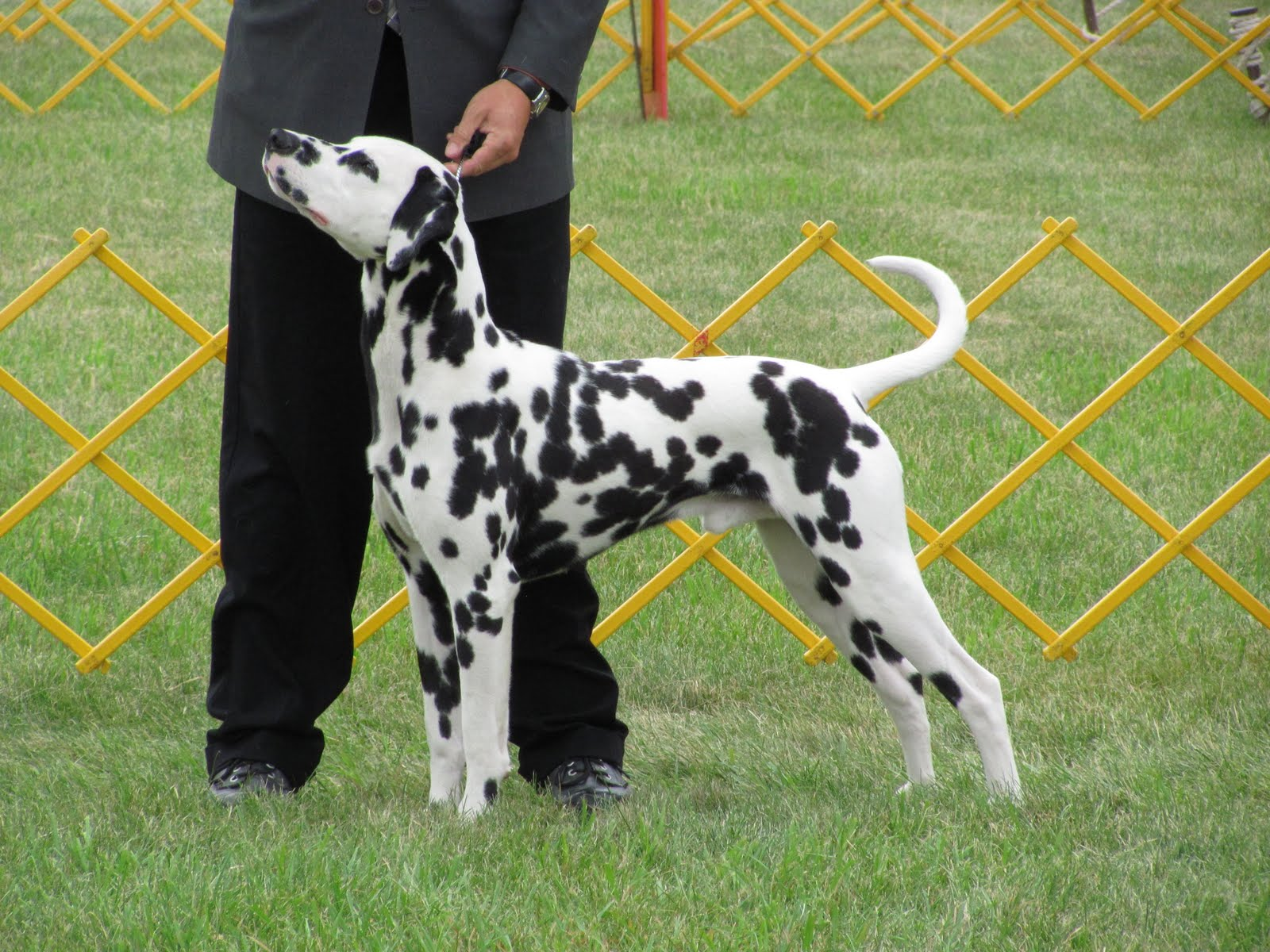 Dog Days Of Summer Part 1 All About A Dog Show Childrens