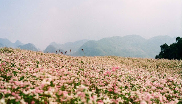 10 experience not to be missed in Ha Giang 1