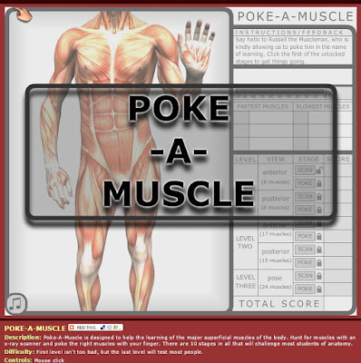 poke a muscle online human body systems game
