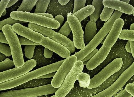 Bagaimana Bakteri Heterotrof Memeroleh Energi? Lilis Nur Azizah