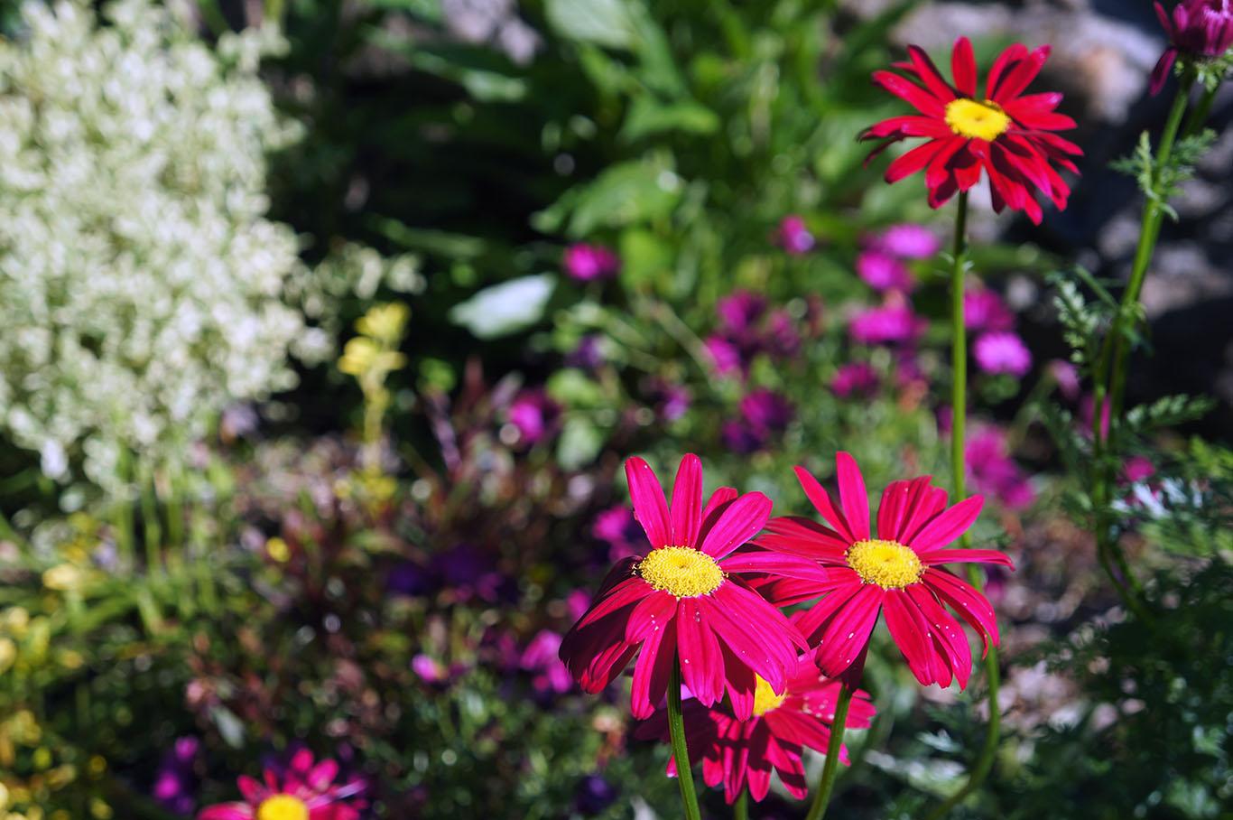 El jard n de la barrosa algunas floraciones de plantas for Plantas perennes exterior