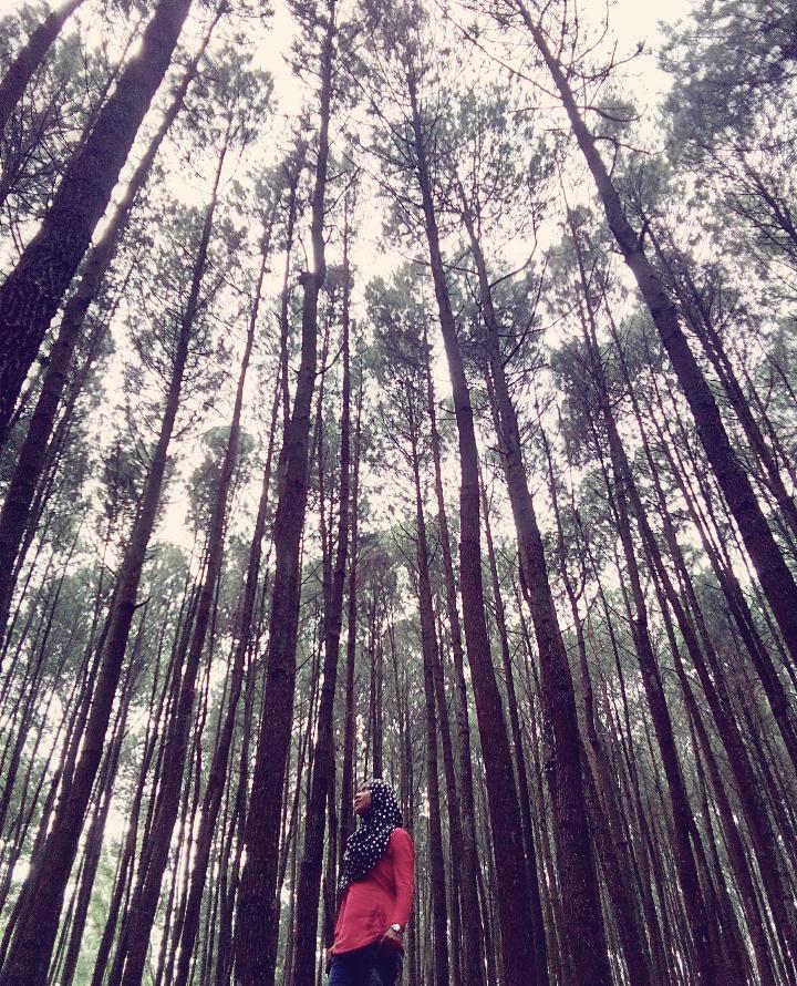 menikmati udara segar di hutan pinus
