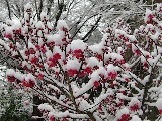 明月院の梅
