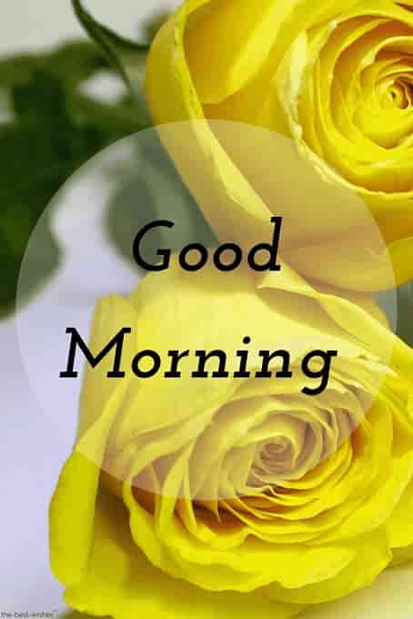 good morning image hd with yellow roses