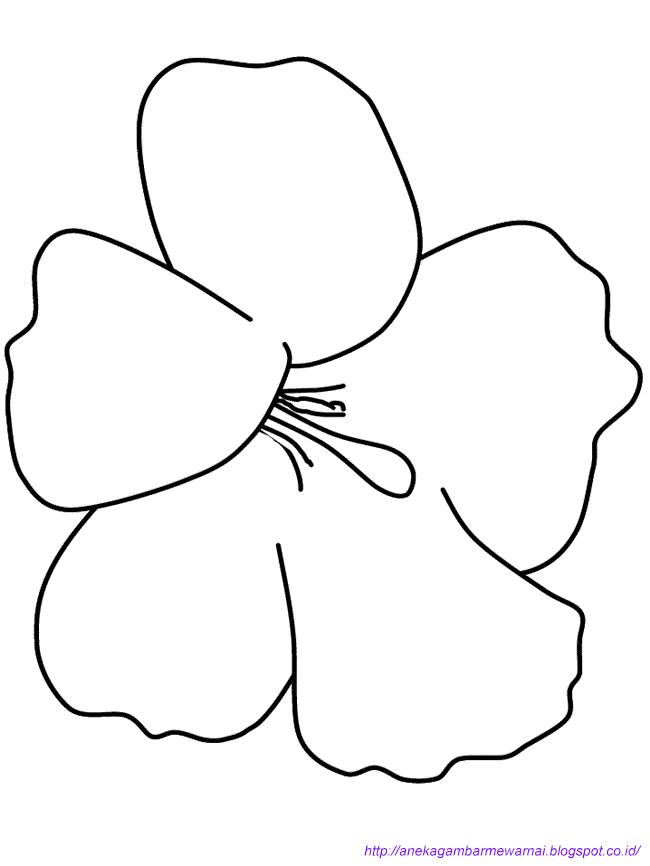 Gambar Mewarnai Bunga Sepatu Untuk Anak Paud Dan Tk