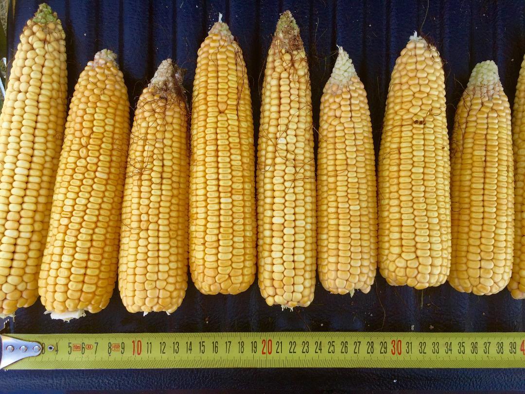 Agronomy-Ukraine
