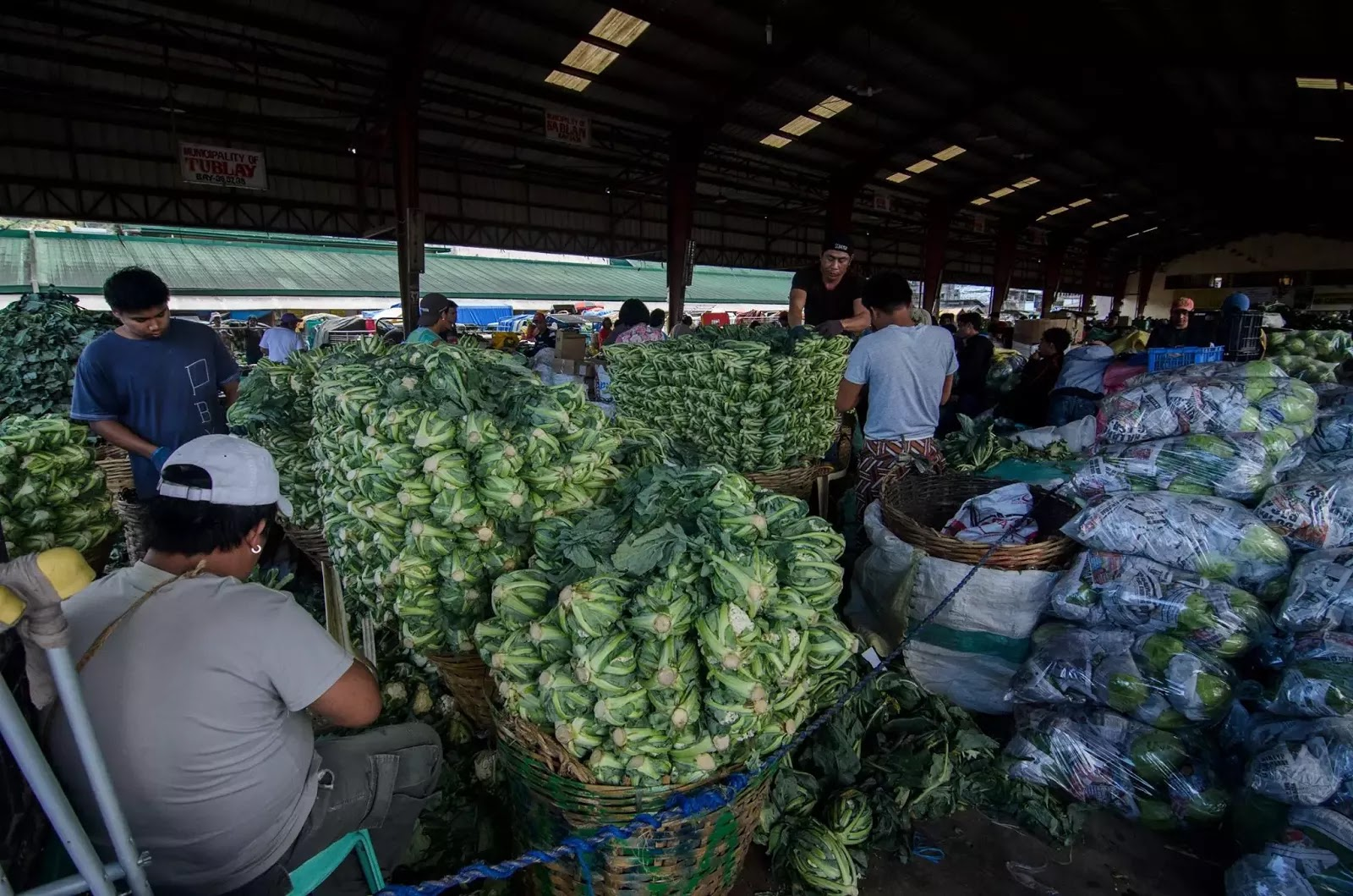 Cleaned Stacks of Fresh Brocolli Inside La Trinidad Vegetable Trading Post Benguet Cordillera Administrative Region