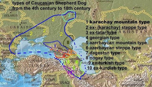 карачаевские кавказские типы овчарок
