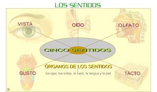 https://www3.gobiernodecanarias.org/medusa/eltanquematematico/lossentidos/organosdelossentidos_p.html