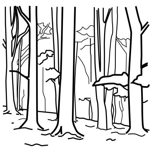 Imágenes Y Mucho Mas El Bosque Realidad Y Fantasía