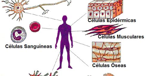 Marca y calcular tasa de metabolismo basal