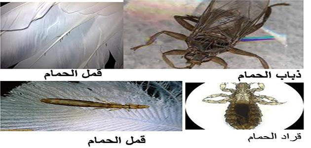 الحل السحري للقضاء علي كل حشرات الحمام نهائياً