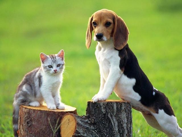 Tại sao chó và mèo lại ghét nhau?