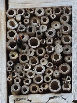 in mijn tuintje - insectenhotel met bij