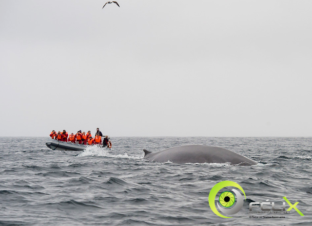 sao miguel whale watching