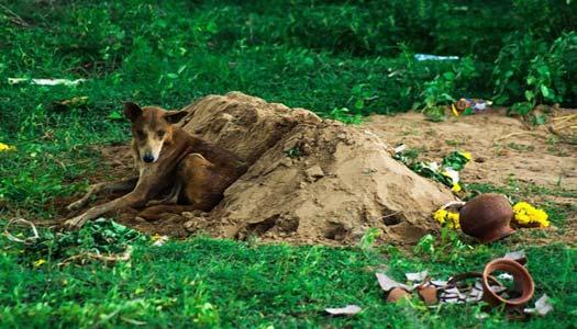 Anjing yang menunggu makam tuannya selama 15 hari 13 Kisah Kesetiaan Anjing yang Dijamin Bikin Nangis