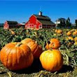 Benefits of Pumpkin in Skincare