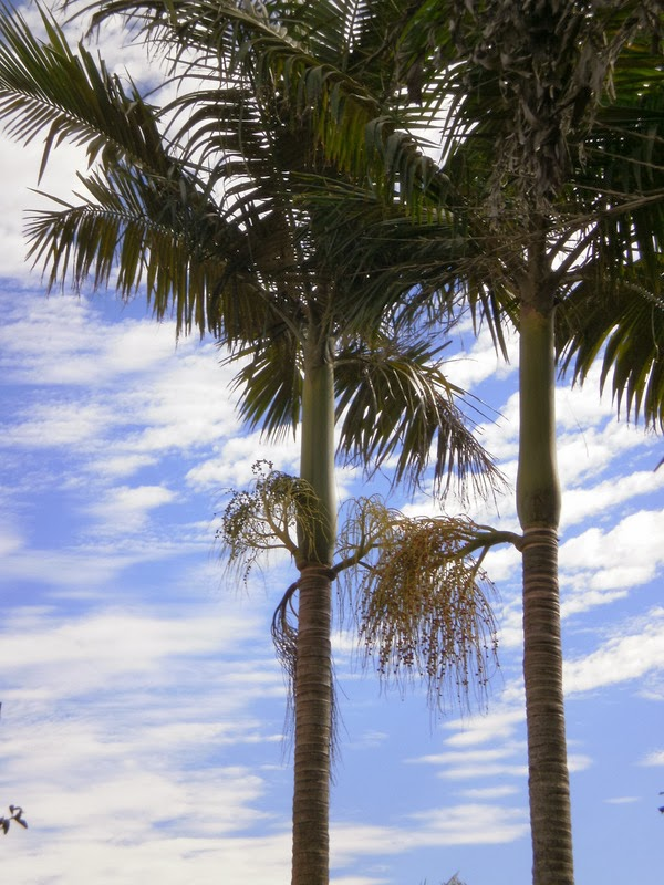 Palms and unusual cloudy sky