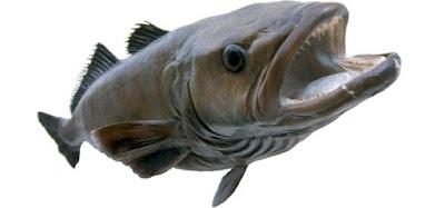 Ikan Kakap Chili (Chilean Sea Bass)