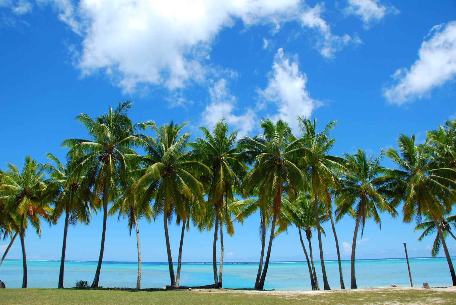 Types Trees Florida