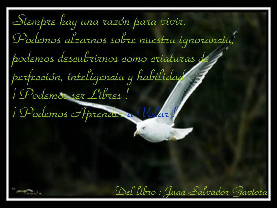 El Rincón de Solita : Citas de libros: Juan Salvador Gaviota