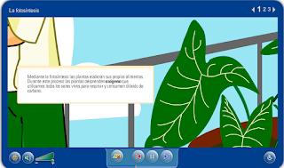 Image result for http://repositorio.educa.jccm.es/portal/odes/conocimiento_del_medio/las_plantas/contenido/cm07_oa03_es/index.html
