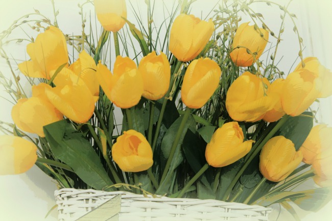 Yellow tulips in a white basket which I posterized in a picture program.