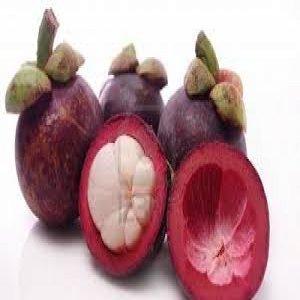 Berbagai manfaat dari hitam kulit ratu buah manggis