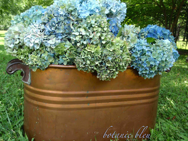 Antique copper pot is filled to overflowing with blue and green hydrangeas