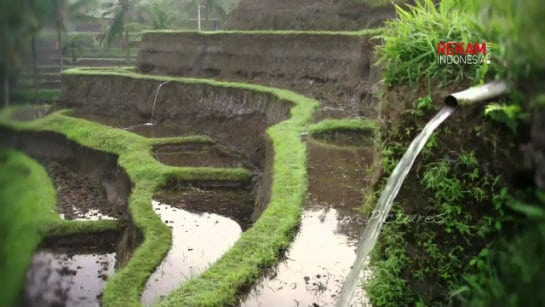 Subak - Bali irrigation Traditional Water Management System