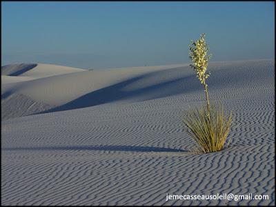 Sable blanc au Nouveau-Mexique