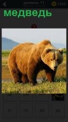 От воды по тропинке идет медведь и размышляет о жизни