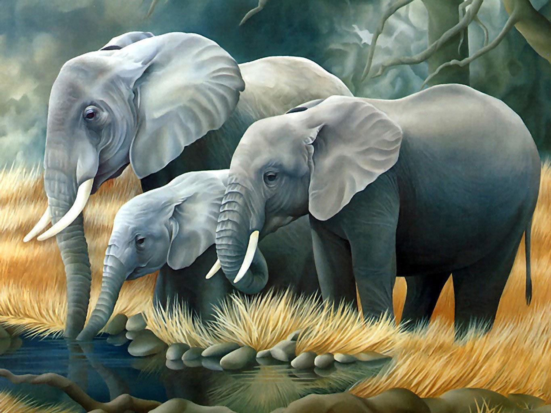 3d animals wallpapers free wallpapers desktop - 3d animal wallpaper ...